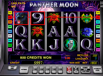 Panther Moon 5